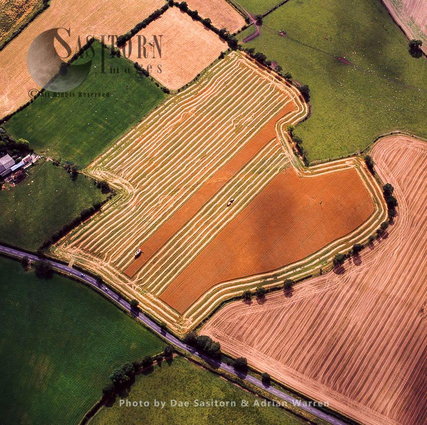 Harvesting, Northumberland, England