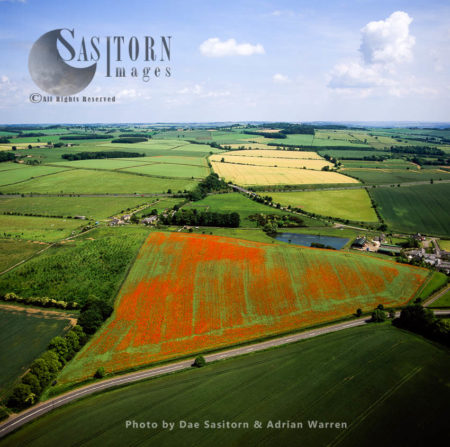 Poppy Fields Near Hexham, Northumberland, North East England