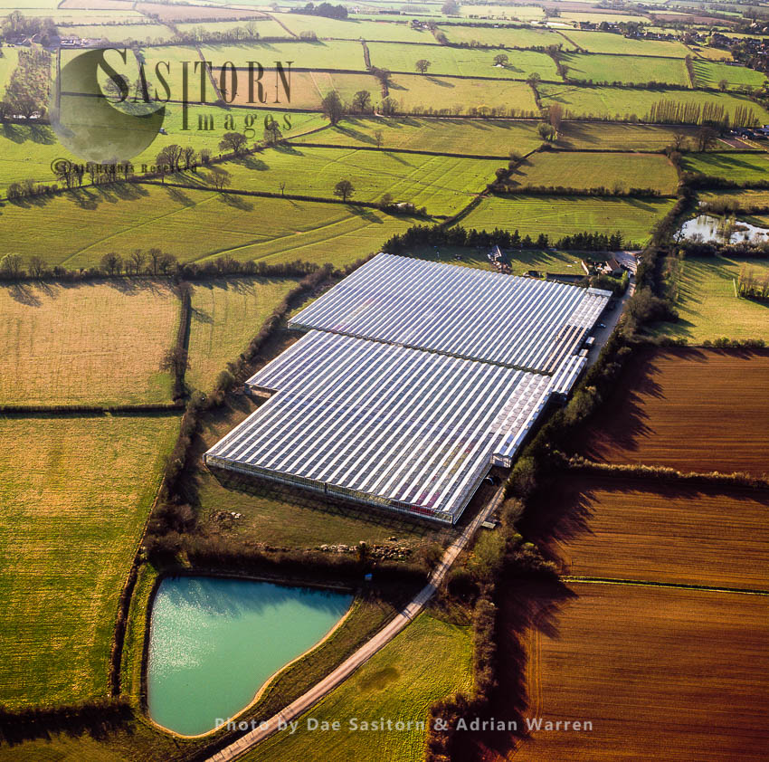 A Greenhouse Near Stoke Sub Hamdon, Somerset