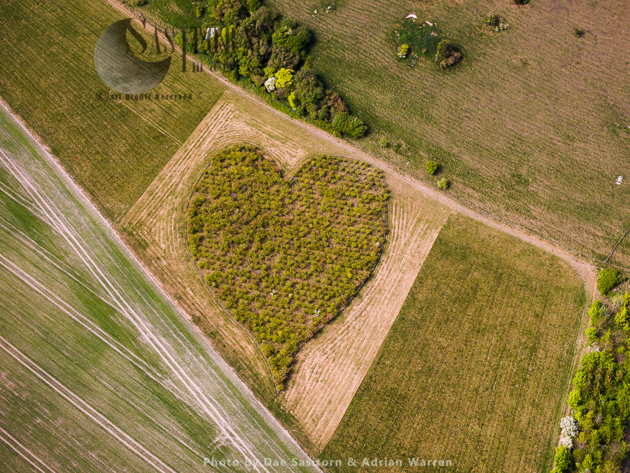 Heart Orchard, Near Huish Hill Earthwork, Oare, Wiltshire