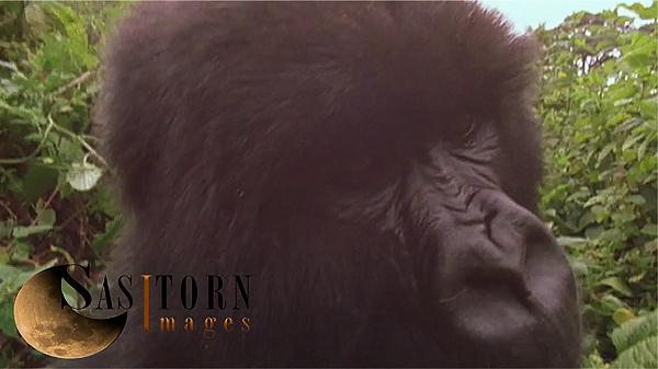Gorilla0248: 2 02:01:50:05