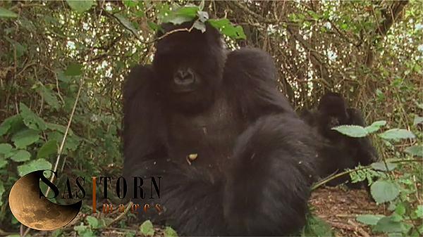 Gorilla0250: 2 02:05:06:13