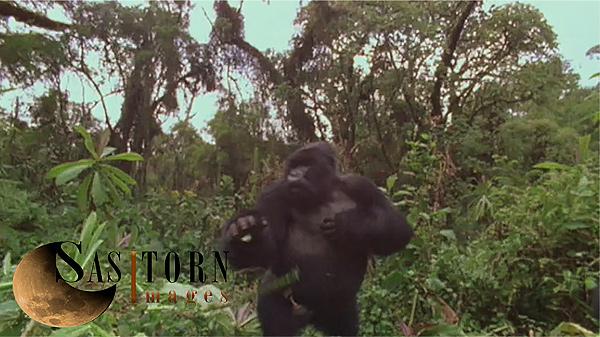 Gorilla0257: 3 03:46:40:17
