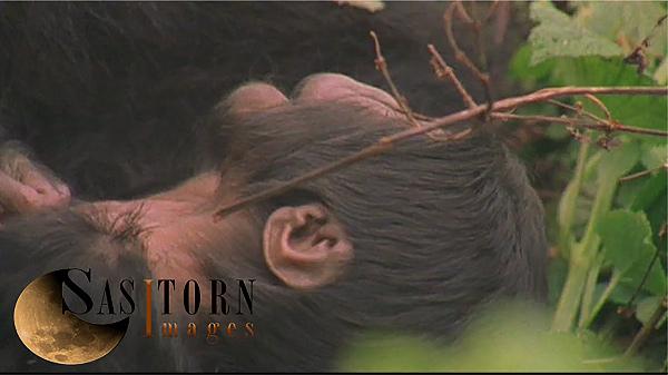 Gorilla0245: 34 08:02:55:01