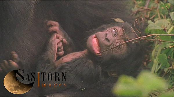 Gorilla0246: 34 08:03:49:04