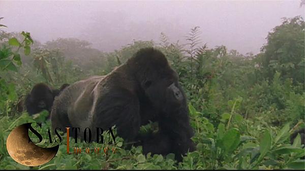 Gorilla0247: 34 08:04:25:04
