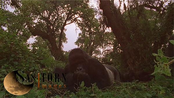 Gorilla0258: 4 04:27:07:08