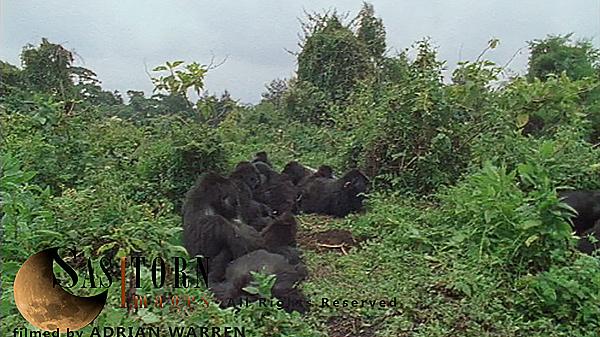 Gorilla0261: 7 07:52:20:01