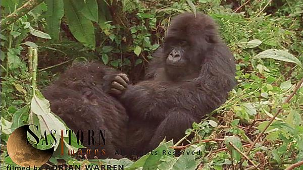 Gorilla0260: 7 07:09:33:23