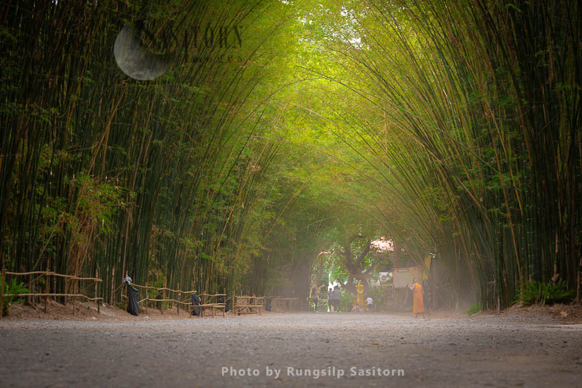 Bamboo Tunnel Forest At Wat Chulabhorn Wanaram, Ban Na District,Nakhon Nayok Province,Thailand.