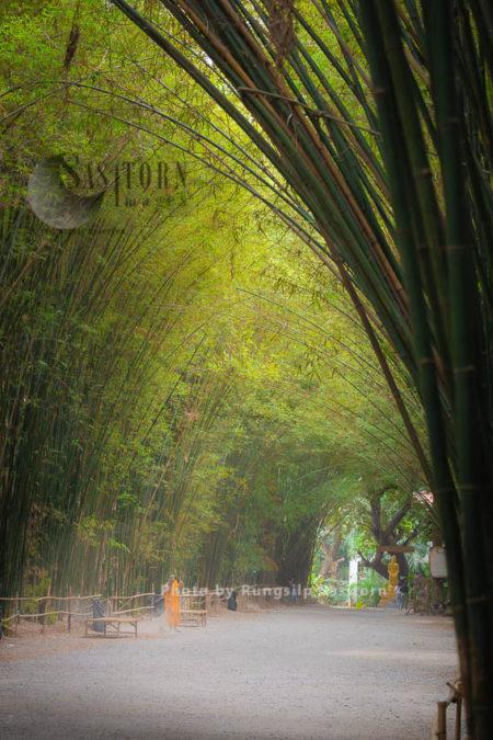 Bamboo Tunnel Forest At Wat Chulabhorn Wanaram, Ban Na District,Nakhon Nayok Province,Thailand.