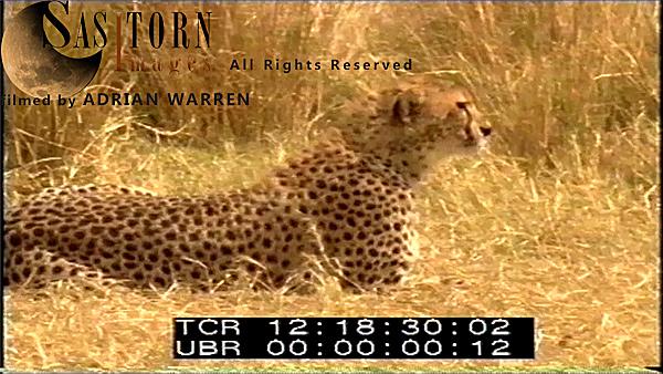 Ngorongoro Crater, Tanzania (195 videos)