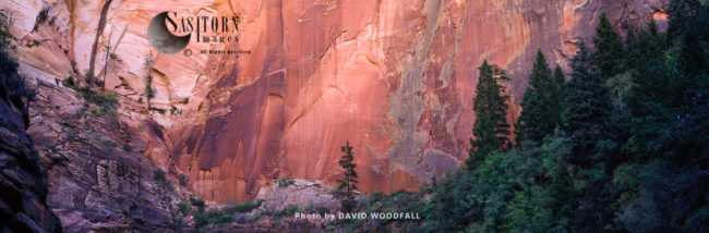 Forest And Canyon Walls, Zion National Park, Utah, USA