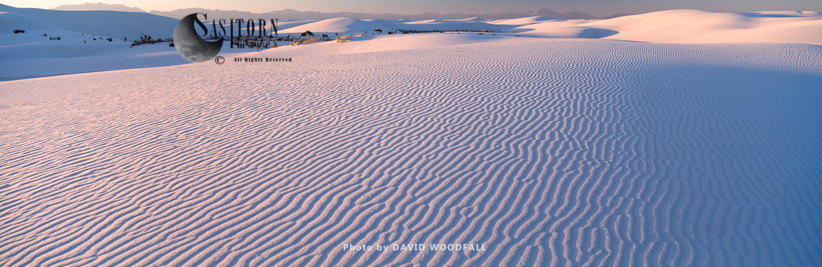 Gypsum dunes desert, White Sands National Park, Tularosa Basin, New Mexico, USA