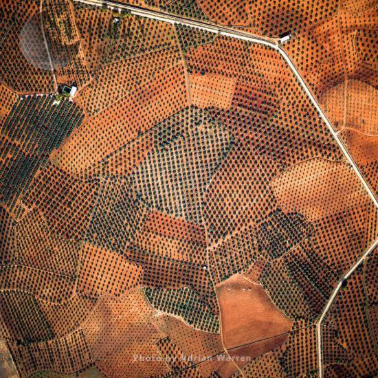 Olive Cultivation Fields, Central Spain