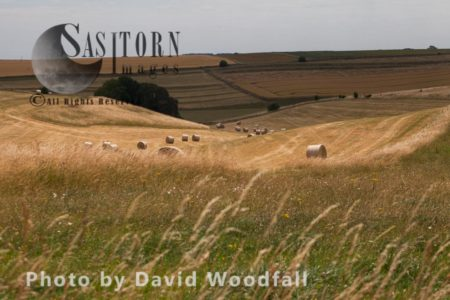 Rolling Grassland And Agricultural Plain-Salisbury Plain, Habitat Of Reintroduced Species Great Bustard, Formerly Extinct In The UK