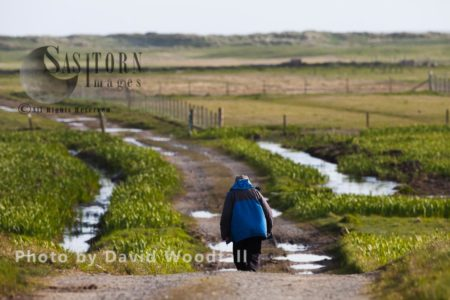 Crofter Walking Down Croft Track/ Road, To His Crofting Land, Important Machir For Nesting Terns And Waders. Berneray, North Uist, Outer Hebrides