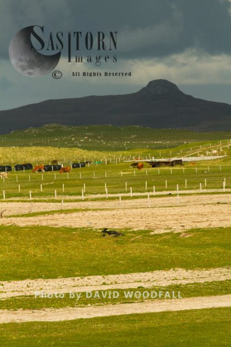 Strips Of Cultivated Machair, Ploughed To Be Planted With Black Oates, Berneray, North Uist, Outer Hebrides, Scotland