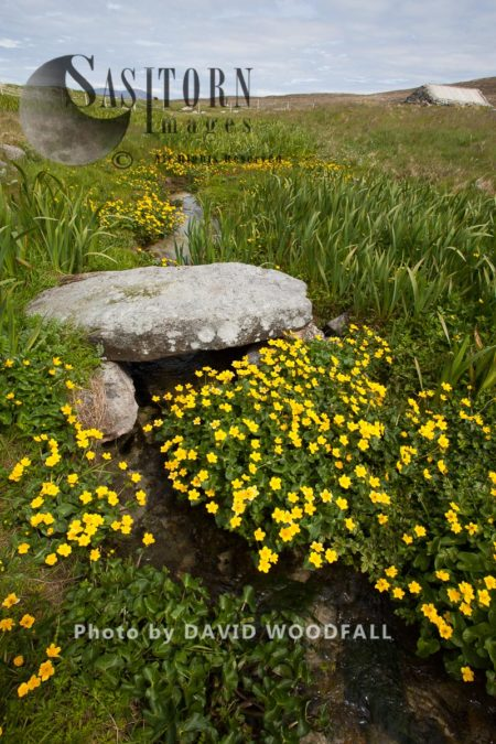 Ancient Stone Bridge Over Burn Running Through Machair, With Abundant Marsh Marigolds (Caltha Palustris). Berneray, North Uist, Outer Hebrides