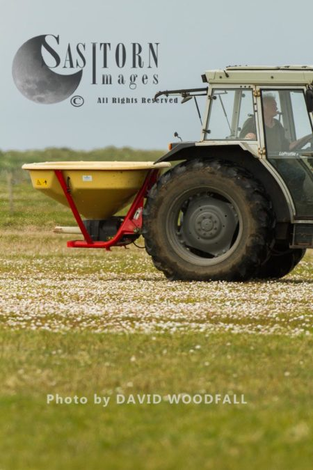 Machair Being Treated With Nitrogen Fertilizer  To Improve It For Agricultural Production By Crofters.Threat To Bio Diversity Of Traditional Machair And Its Wildlife, Berneray, North Uist, Outer Hebrides