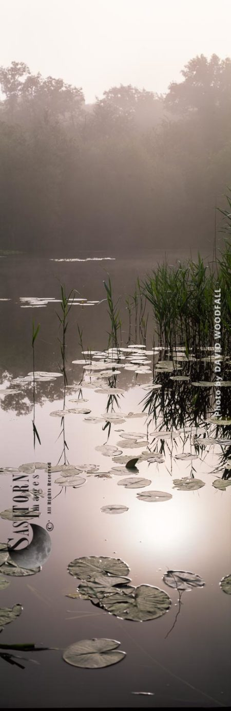 Vertical Landscape: Misty Lake With Lily And Bullrush, England