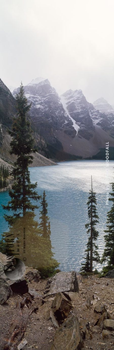 Backlit Mountain Hemlocks, Maligne Lake, Rocky Mountains, Banff National Park, Alberta, Canada