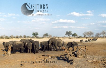 African Elephants (Loxodonta Africana), Herd At Pan, Hwange Safari Lodge, Zimbabwe, Waterhole, Water Pan