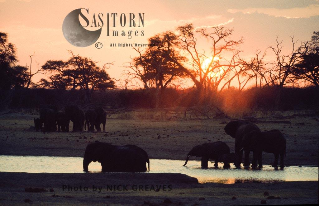 African Elephant (Loxodonta africana), sunset on Kennedy Pan, Hwange National Park, Zimbabwe