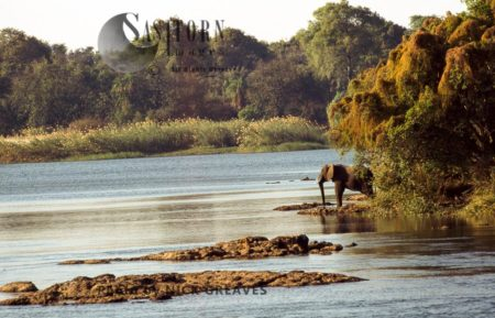 African Elephant (Loxodonta Africana), A Lone Elephant On Zambezi Island, Zambezi National Park, Zimbabwe