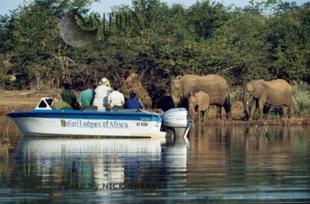 African Elephant (Loxodonta Africana),  Matusadona National Park, Lake Kariba, Zimbabwe
