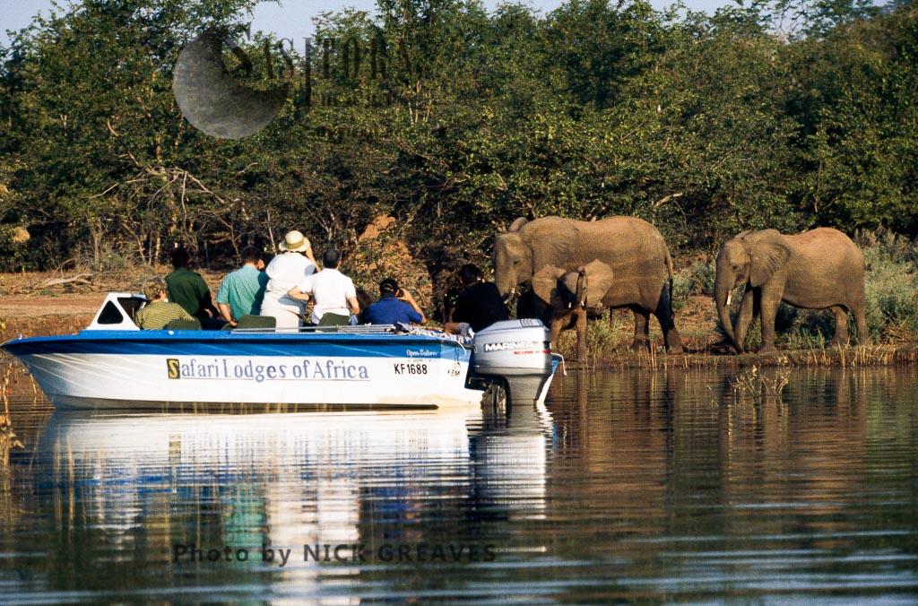 African Elephant (Loxodonta africana),  Matusadona National Park, Lake Kariba Zimbabwe