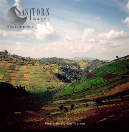Intensive Agriculture And Settlement On Virunga Foothills, Rwanda