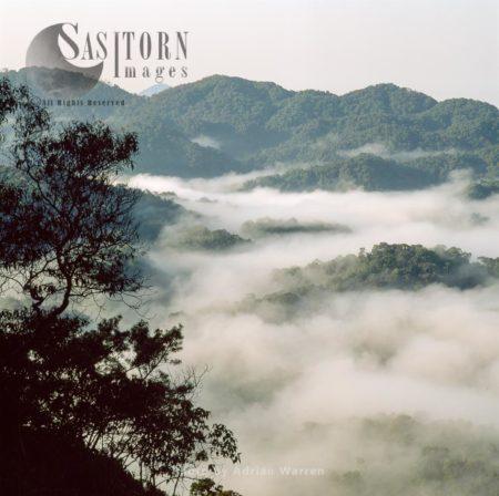 Misty Forest Dawn, Nyungwe Forest, Rwanda, East Africa,