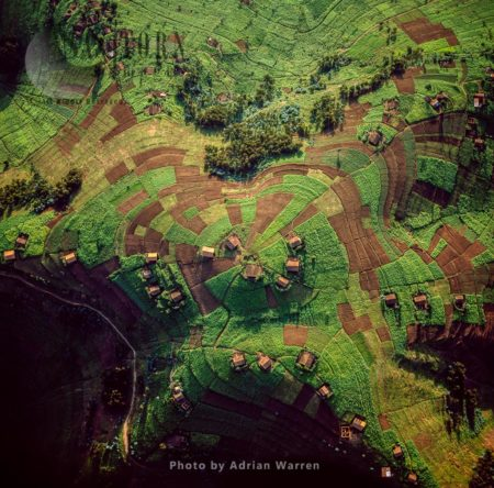 Intensive Hillside Agriculture And Concentrated Settlement On Virunga Foothills