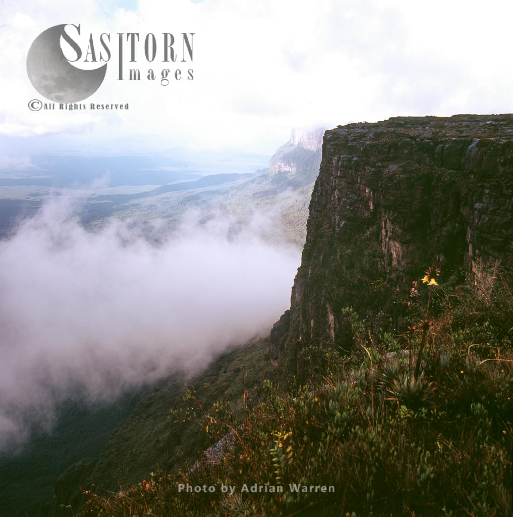 Looking north at Roraima from the 'window' with Orectanthe sceptrum, Tepuis, Canaima National Park, Venezuela