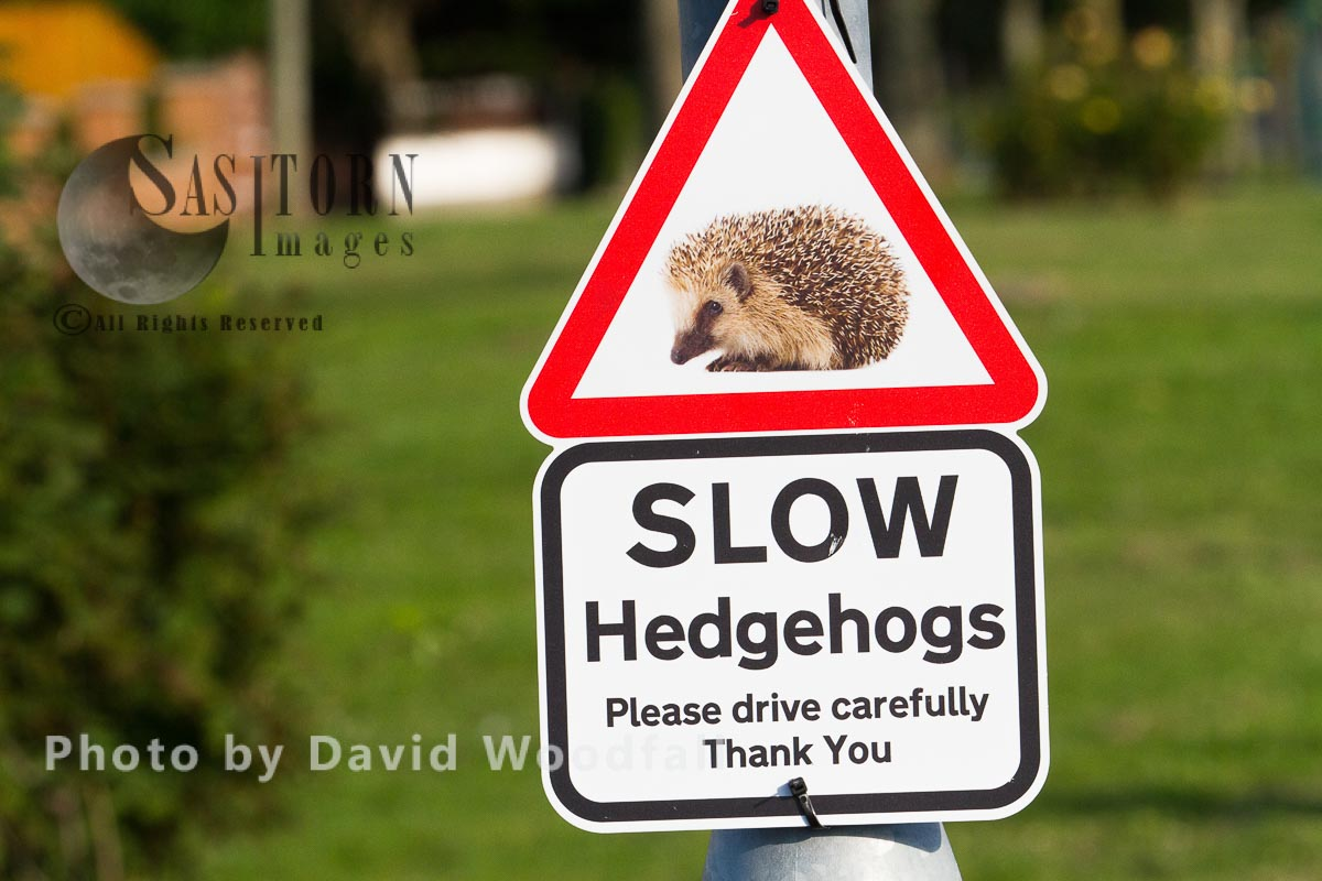 Beware of Hedgehog crossing road, sign warning drivers