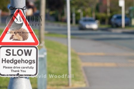 Beware Of Hedgehog Crossing Road, Sign Warning Drivers