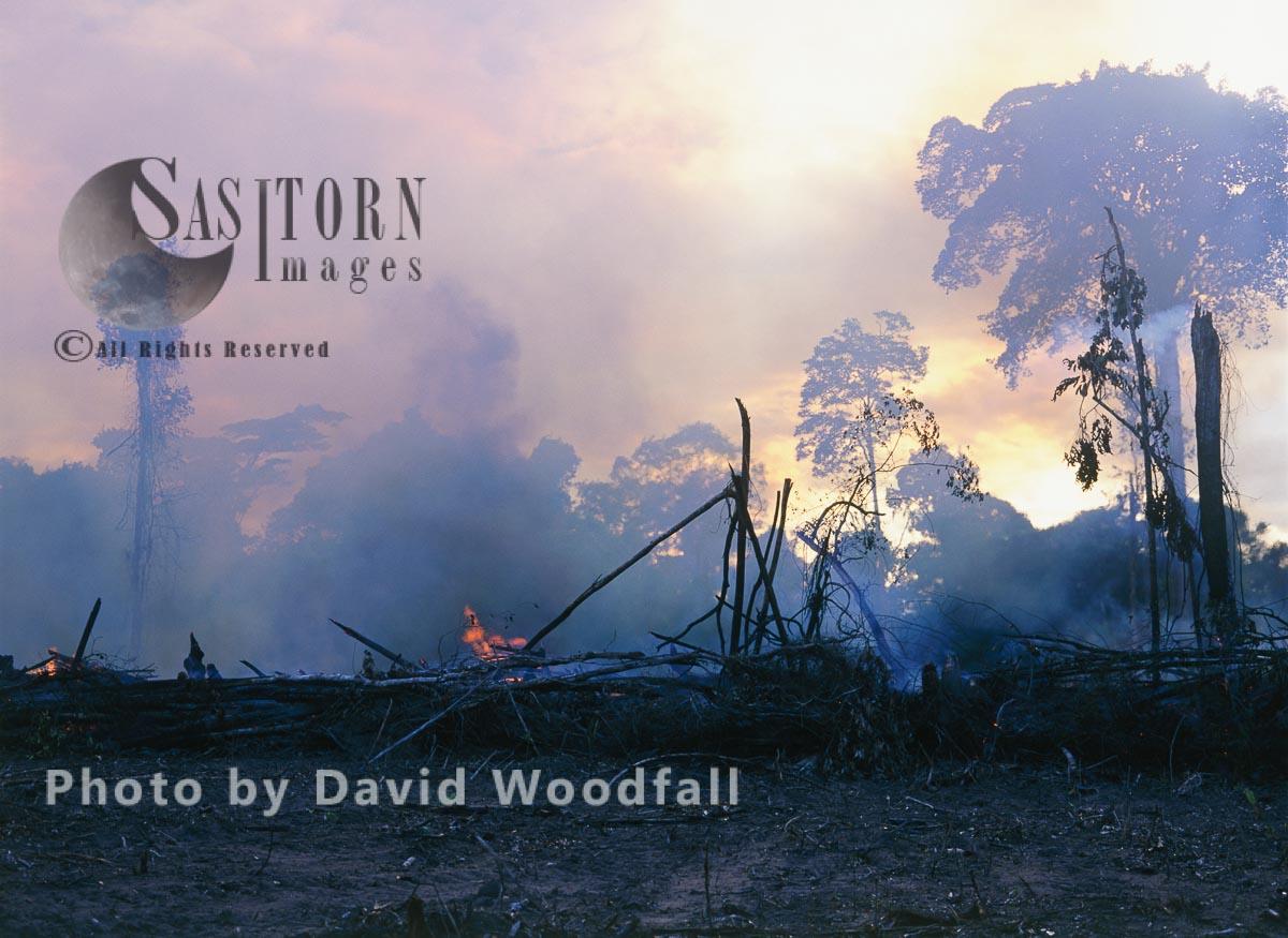 Rainforest burnt for cattle ranching