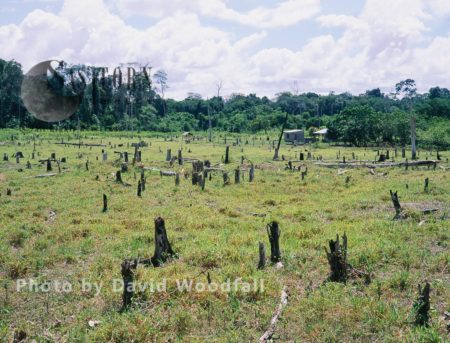 Slash And Burn Agriculture, Venezuela