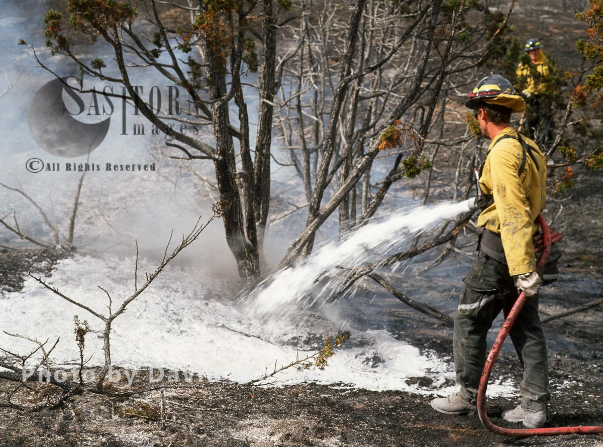 Wildfire in Big Timber Forest
