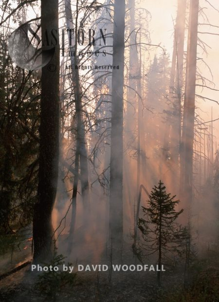 Forest Wildfire, Yellowstone National Park