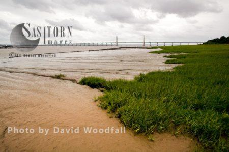 Spartina And Mudflats On Severn Estuary, England