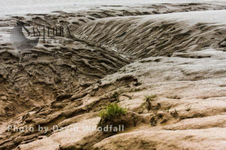 Tidal Channel At Low Tide, Severn Estuary