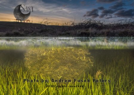 Frog Spawn On The Long Mynd Upland At Dusk