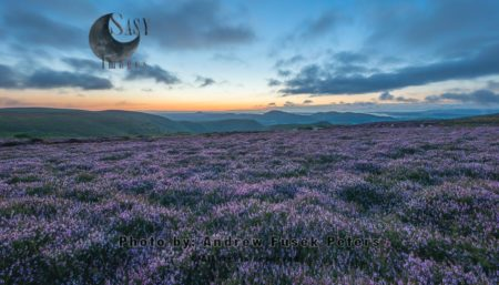 Dawn With Heather In Bloom On The Long Mynd