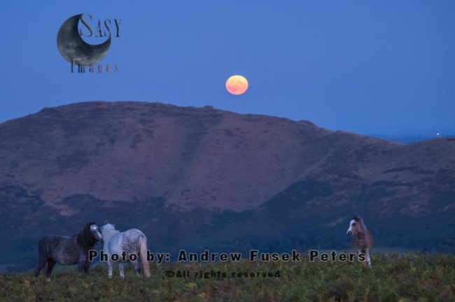 Harvest Moon Rising Over Caradoc From The Long Mynd