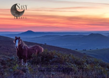 Pony At Dawn On The Long Mynd, Shropshire Hills